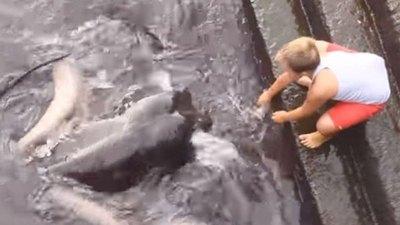 Como si fuera mascota tocó a bicho de mar