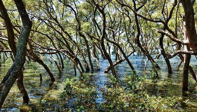 ¿Por qué son importantes las áreas protegidas y cómo se encuentran las de Paraguay?