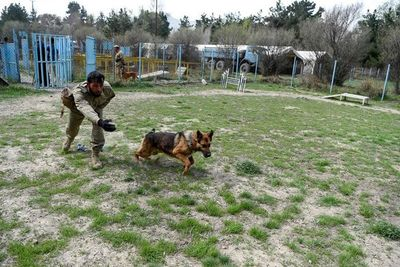 Entrenarán a perros para detectar covid-19