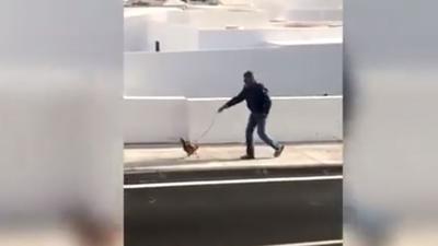 Video: violó la cuarentena por sacar a pasear a su gallina