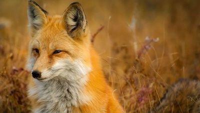 Aumentan enfermedades transmitidas de animales a humanos, según ONU Medio Ambiente