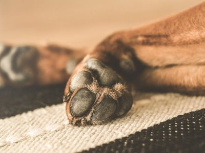 No se debe usar detergente o hidrogel en perros o gatos, advierten veterinarios