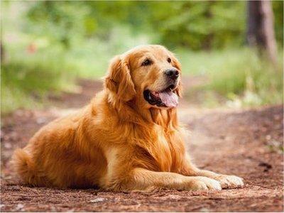 Un perro solidario lleva comida a su vecina en cuarentena