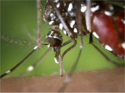 Continúa el descenso de casos de dengue