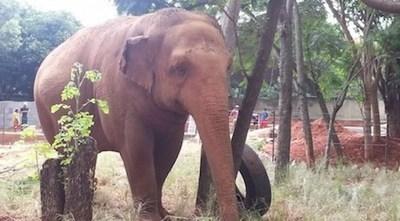 """Los """"habitantes"""" del zoológico podrían pasar hambre, advierte directora"""