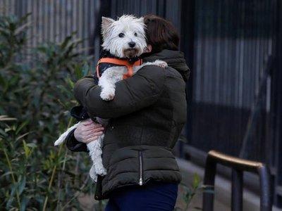 Las personas podrían transmitir el virus a mascotas, según informe español