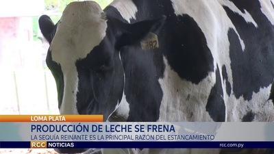 TRAS MARCAR RÉCORDS, PRODUCCIÓN LECHERA DEL CHACO SE ESTANCA