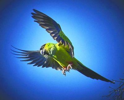 Los 4 cambios geniales de la naturaleza en la cuarentena