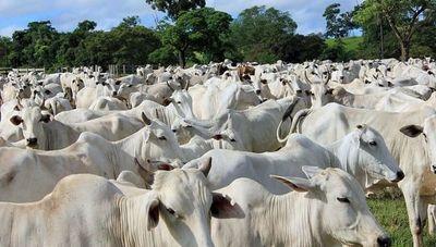 """""""Paraguay es productor de carne por excelencia, un desabastecimiento es improbable"""""""