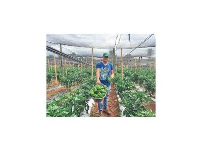 Productores frutihortícolas consideran que el plan del MAG es insuficiente