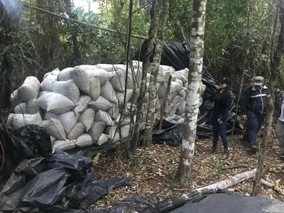 SENAD incauta más de 4 toneladas de marihuana en Azote'y