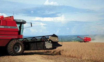 » COVID-19 afectará al 70% de la producción paraguaya