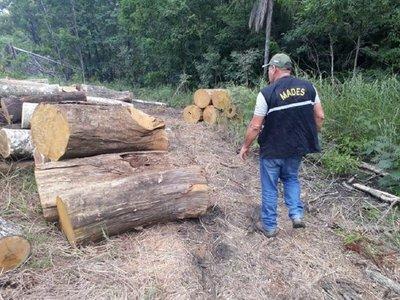 Fiscalía y Mades constatan tala de árboles en el Parque Nacional San Luis