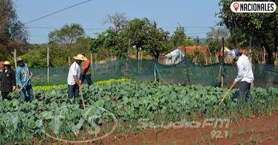 Distribuyen semillas a comunidades vulnerables para huerta familiar de autoconsumo