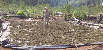 51 toneladas de marihuana fue destruido en Alto Paraná