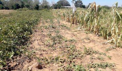La sequía golpea más que covid-19 a comunidades de la Región Occidental