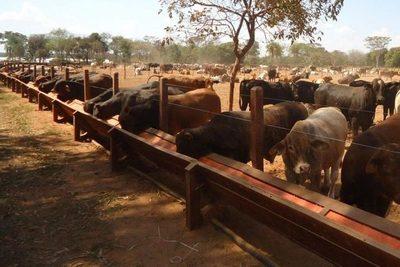 Incertidumbre en sector ganadero