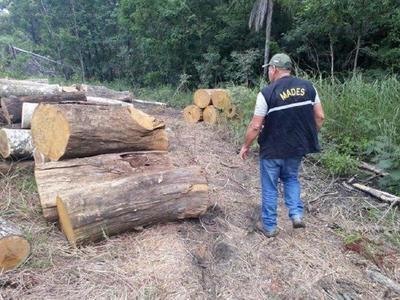 MADES inicia investigación sobre tola indiscriminada en el Parque Nacional San Luis – Diario TNPRESS