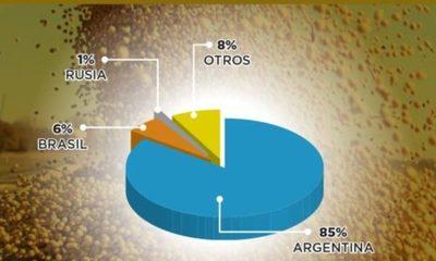 » Exportación de soja paraguaya se concentra a nivel regional