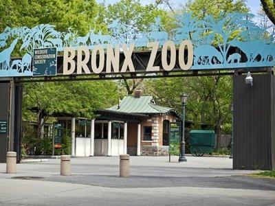 Covid-19 se extiende en Zoo de EEUU, hay 8 felinos afectados
