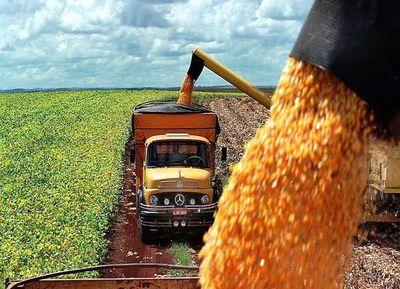 Exportaciones de maíz se duplicaron