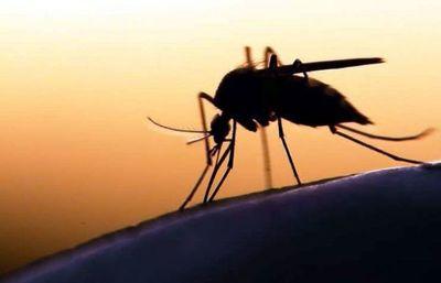OMS teme que puedan morir este año 769.000 personas en África por malaria