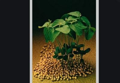 » Tratamiento Industrial de semillas es clave para evitar enfermedades