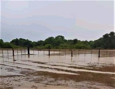 Precipitaciones caídas en el Chaco aplacan un poco la sequía