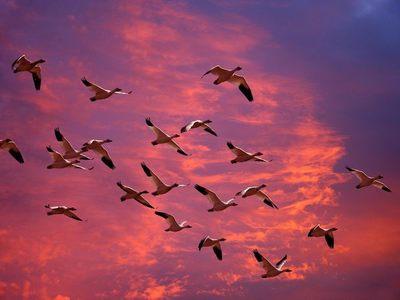 Asunción, será sede de observatorio de aves en el 2022