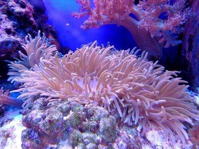 Impacto del desarrollo en arrecifes es tan devastador como un vertido
