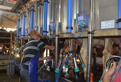 En Paraguay producen 2.500.000 litros de leche al día