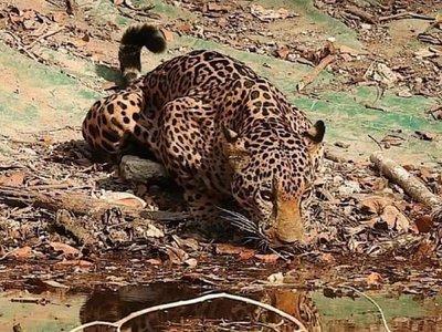 Animales reaparecen en parque nacional guatemalteco por falta de visitantes