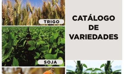 » Ipta presentó catálogo de 6 especies agrícolas