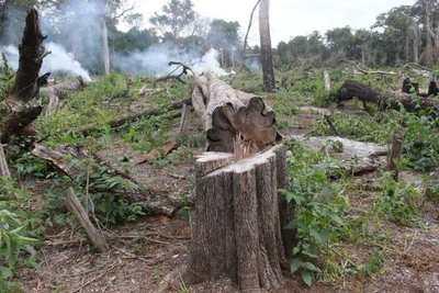 Denuncian tala indiscriminada en Cordillera del Ybytyruzú