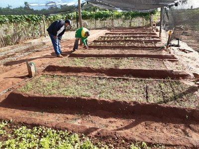 Acompañan buena producción frutihortícola en varios departamentos