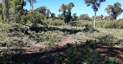 SENAD sacó de circulación 30.000 kilos de cannabis en Alto Paraná