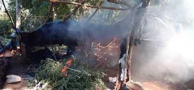 Senad destruye varios campamentos de marihuana en reserva forestal