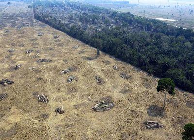 Nuevo récord de deforestación en la Amazonía brasileña