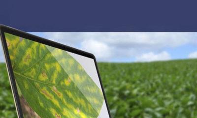 » ACADEMIA VIRTUAL BAYER: Conocimientos para el mejor manejo del cultivo
