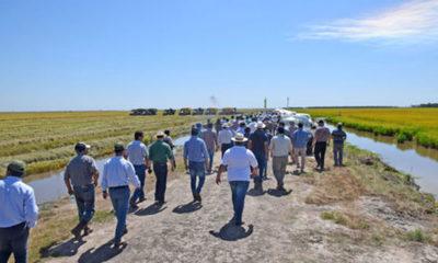 » TERCERA JORNADA TÉCNICA DE ARROZ EN ARROZALES DEL CHACO: Muestran potencial de arroz en el Chaco