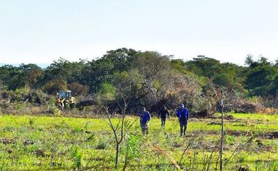 Suspenden  tala dentro de reserva protegida