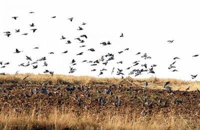Denuncian brutalidad policial contra nativo que cazaba palomas
