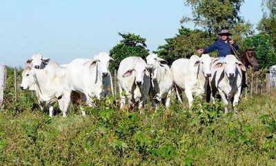 """ARP pide abrir mercado de la carne con China para """"salvar la economía"""""""