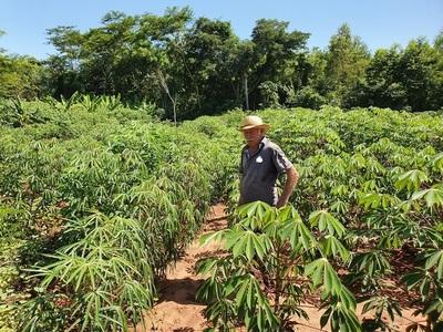 Productos agrícolas, sostén de familias en Concepción