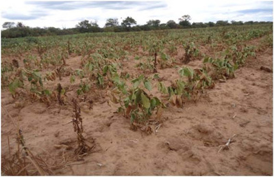 Boqueron y Alto Paraguay con la peor sequía en 50 años.