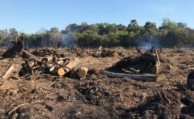 Detectan tala de árboles, quema de bosques y otros delitos ambientales