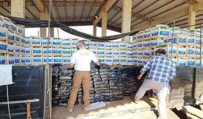 Incautan tres toneladas de marihuana en Chaco'í