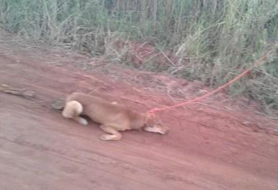 Nuevo caso de maltrato animal en Campo 9
