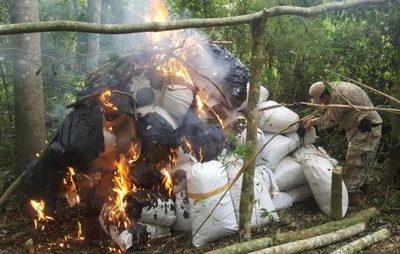 SENAD eliminó más de 8,6 toneladas de marihuana en campamentos de Alto Paraná