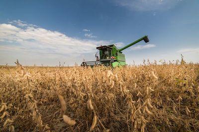 El clima actual favorece el desarrollo de los granos de temporada